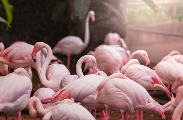 美しいピンクのフラミンゴのクローズアップ