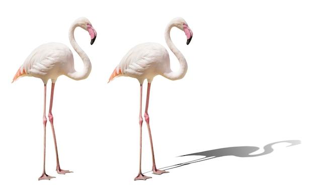 아름다운 핑크 플라밍고 포즈. 외딴