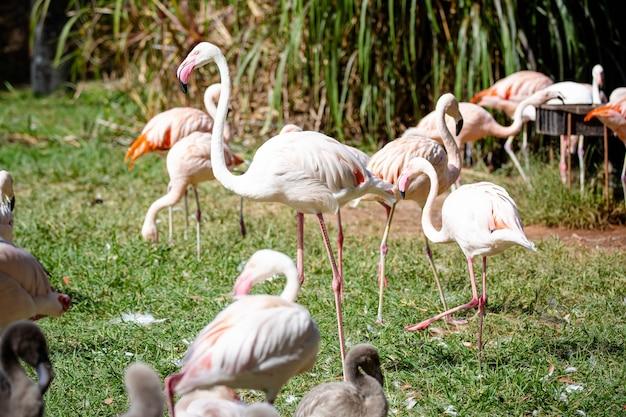 Красивые розовые фламинго