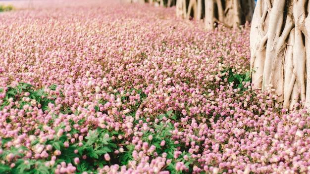 美しいピンクの花畑秋の木。写真の背景咲くロマンチックなピンクの花の木フィールド夢のような美的芸術結婚式の祭りパーティー恋人の背景