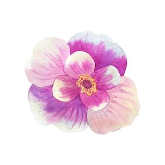 黄色い雄しべを持つ美しいピンクの花。水彩手描きイラスト。白い壁に隔離。
