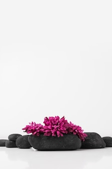 Beautiful pink flowers on black spa stones isolated on white backdrop