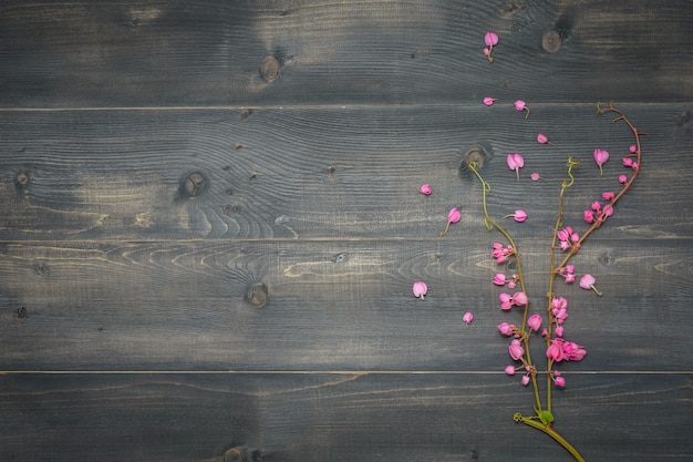 Beautiful pink flowers on black wooden background or backdrop