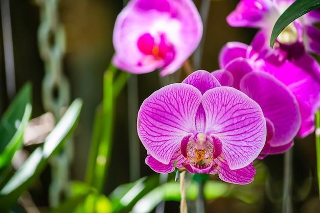 정원에서 아름다운 분홍색 꽃