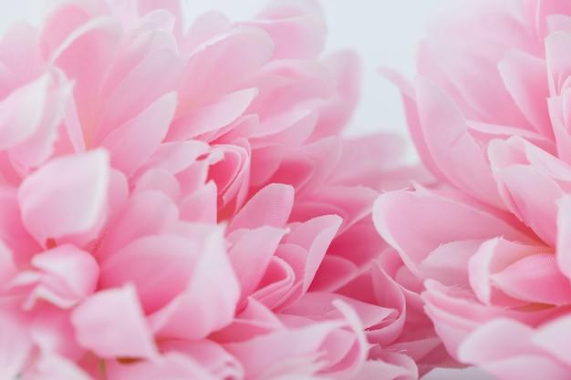 Красивые розовые цветы сделаны с цветными фильтрами