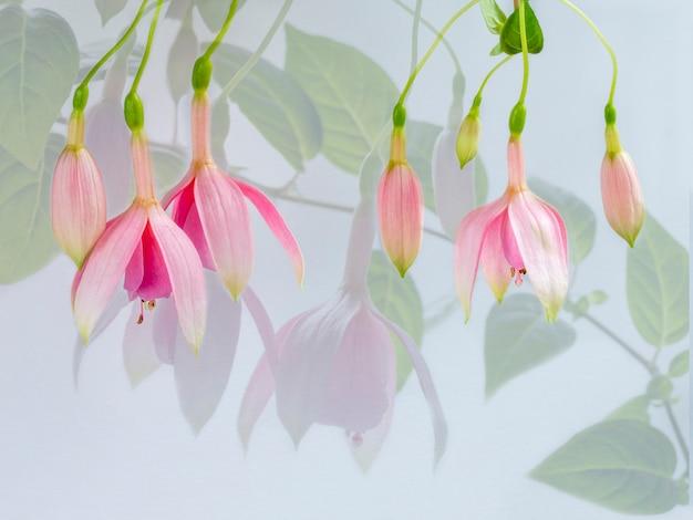 아름다운 분홍색 꽃, 자홍색 꽃의 다중 노출.