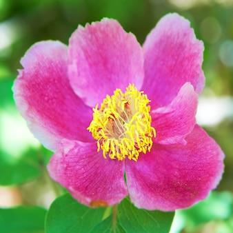 그린 필드에 아름 다운 핑크색 꽃