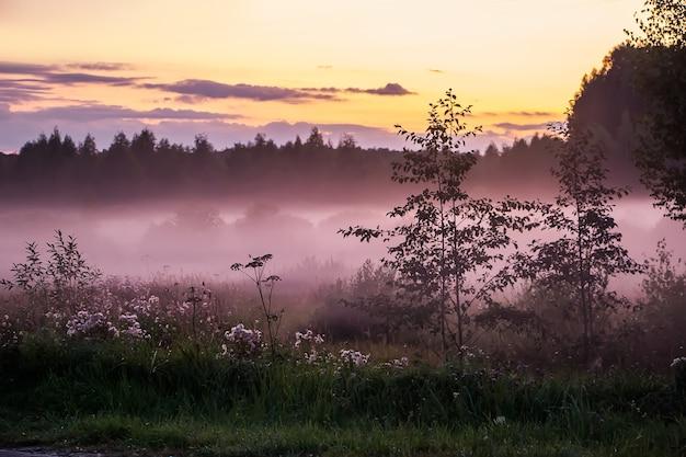 日没時の美しいピンクの霧。森の中の自然にたそがれ。デザインのぼやけた背景