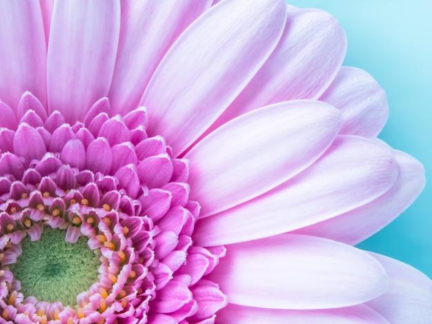 Beautiful pink gerbera flower in macro closeup. wallpaper, background, desktop, cover.