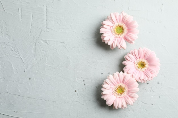 Beautiful pink gerbera flowers with little stars on gray. space for text
