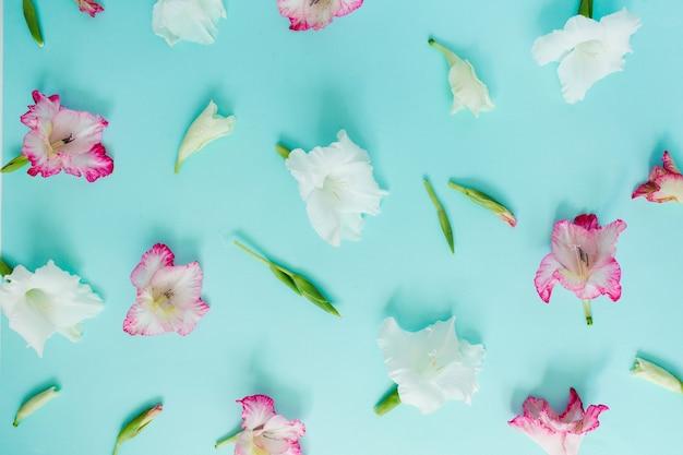 パステルブルーの美しいピンクのグラジオラスの花のつぼみ