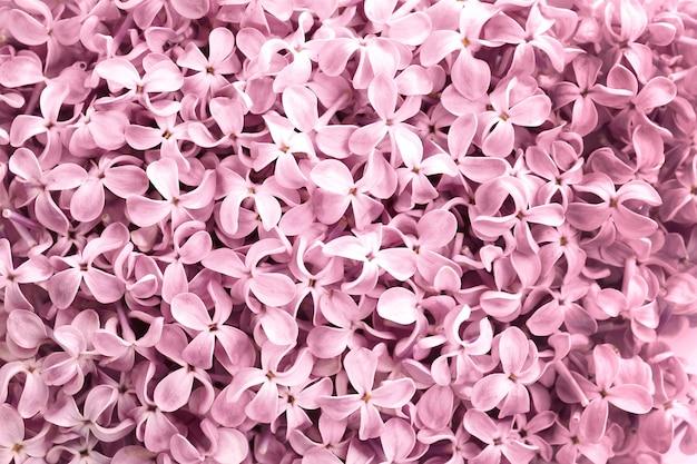 美しいピンクのライラックの表面