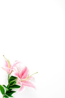 Beautiful pink lily flower on white surface