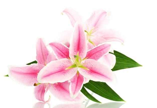 白い表面に孤立した美しいピンクのユリ