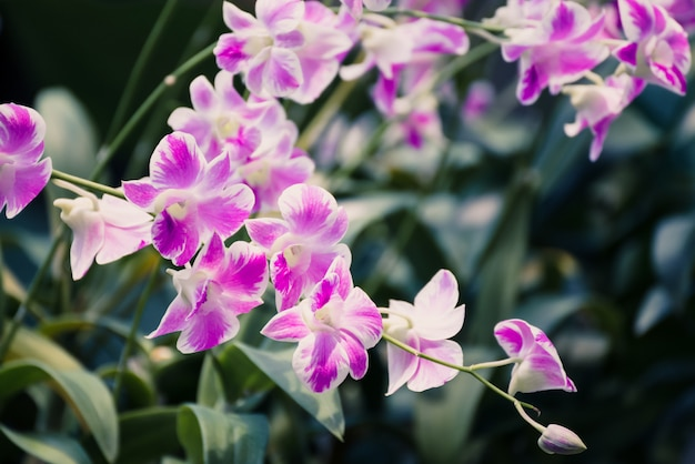 Beautiful pink orchid flower blooming in the garden