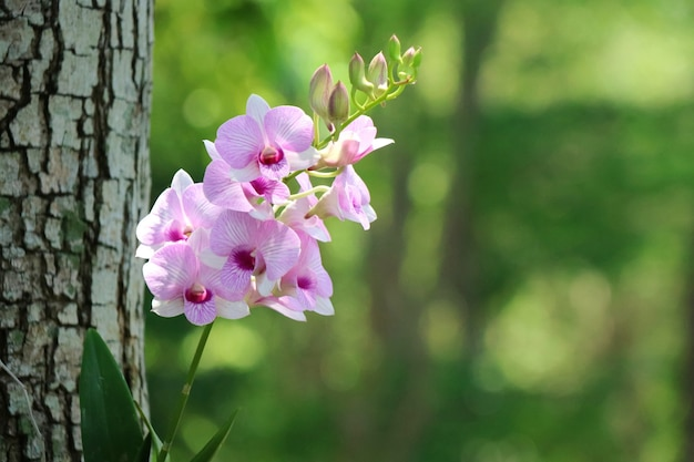 나뭇가지가 있는 아름다운 분홍색 난초, 흐릿한 녹색 잎 배경이 있는 부드러운 초점. 자연 개념입니다.