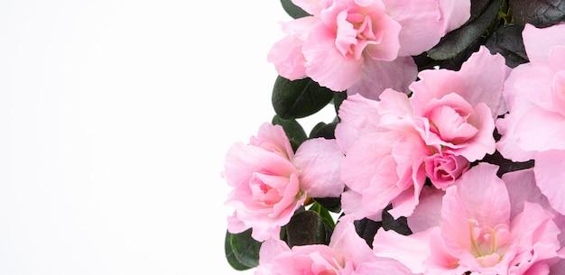 白い背景の上の美しいピンクのパステルカラーの春の花