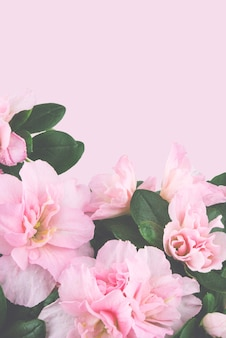 Beautiful pink pastel spring flowers on pink background