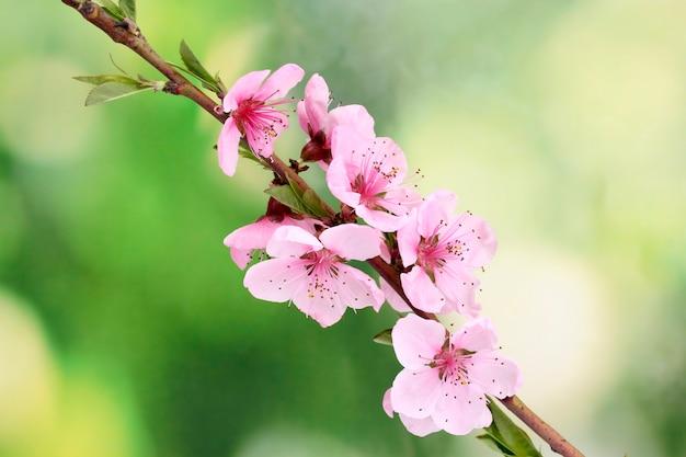 緑の美しいピンクの桃の花