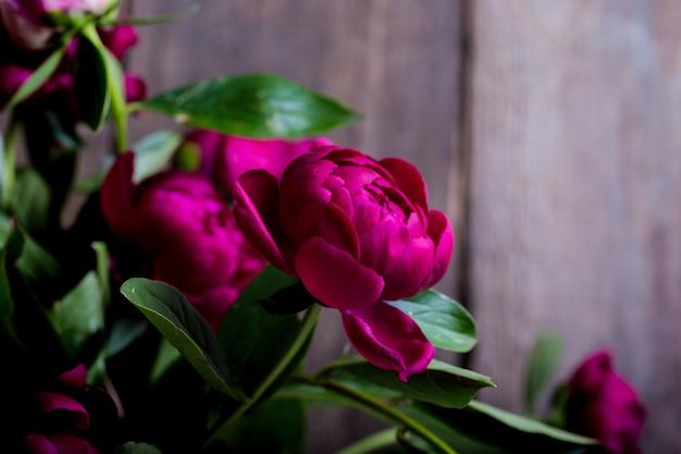 Красивые розовые пионы крупным планом
