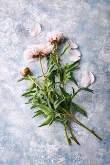Beautiful pink peonies flowers