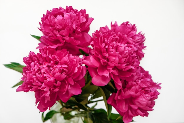 Beautiful pink peony bouquet close-up on pink. top view. flat lay