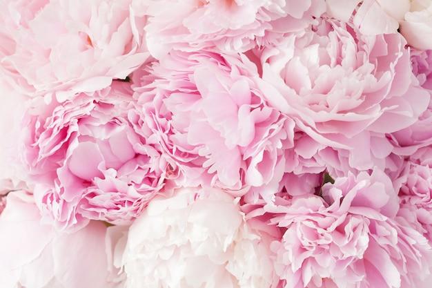 Красивый розовый пион цветок фон