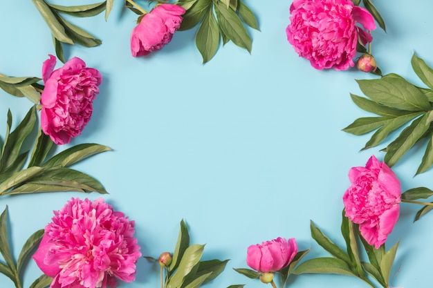 Beautiful pink peony flowers as frame on punchy pastel blue background