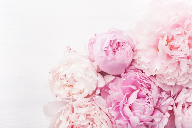 Красивые розовые цветы пиона