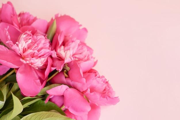 Красивый розовый пион стена с копией пространства