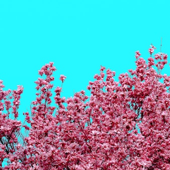Beautiful pink plant blooms. minimal nature art