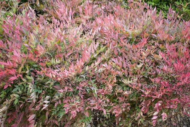 美しいピンクの植物