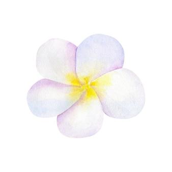 美しいピンクレッドフラワーハイビスカス。手描きの水彩イラスト。孤立。