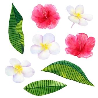 美しいピンクの赤い花のハイビスカスと白いフランジパニまたはプルメリア。手描きの水彩イラスト。孤立。