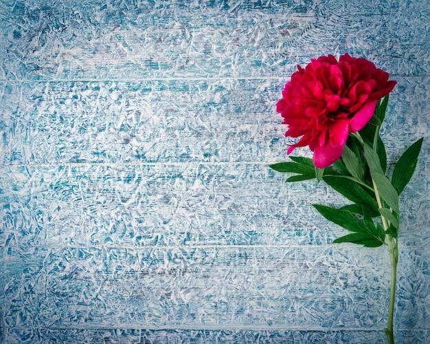 あなたのテキストの上面図とフラットレイスタイルのためのコピースペースと凍った素朴な木製のテーブルの上の美しいピンクの赤いマルサラ牡丹の花