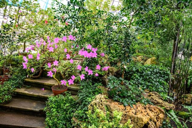 아름다운 분홍색 진달래. 아름다운 꽃들. 아름다운 정원의 아름다운 꽃들 프리미엄 사진