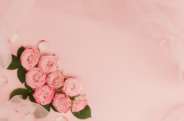 Beautiful pink rose flowers copy space