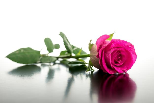 리플렉션 사용 하여 책상에 누워 아름 다운 핑크 로즈