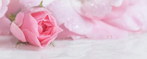 Красивая розовая роза с каплями воды на белом мраморе может быть использована как романтический фон с мягким фокусом