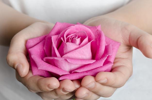 Beautiful pink rosebud in hands Premium Photo