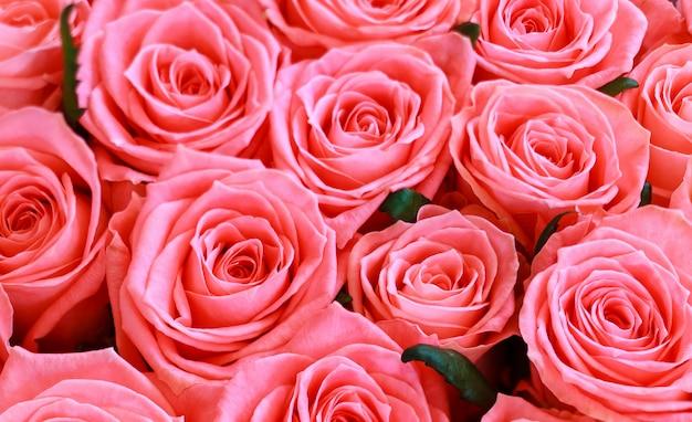 美しいピンクのバラの背景