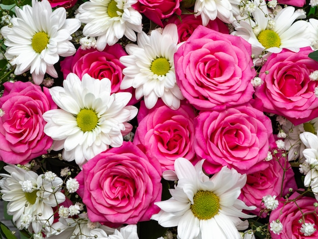 Beautiful pink roses and white daisies close-up, floral background.