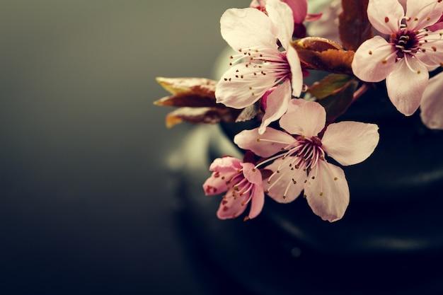 젖은 배경에 스파 뜨거운 돌에 아름 다운 핑크 스파 꽃. 측면 구성. 공간을 복사하십시오. 스파 개념. 어두운 배경.