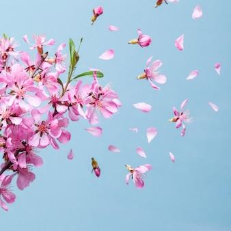 파란색 배경에 아름다운 분홍색 봄 꽃 폭발