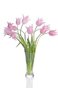 Beautiful pink tulips isolated