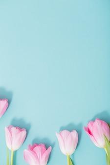 青色の背景に美しいピンクのチューリップ