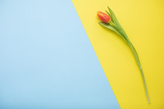 コピースペースと色とりどりの紙の背景に美しいピンクのチューリップ。春、夏、花、色のコンセプト、女性の日。