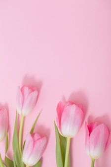 Красивые розовые тюльпаны на розовом фоне