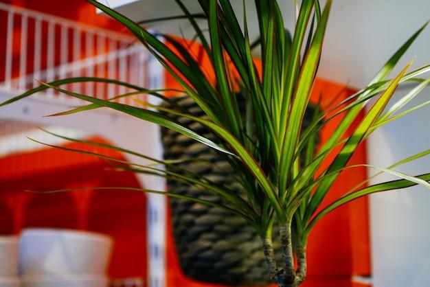 디자인실 배경의 아름다운 식물