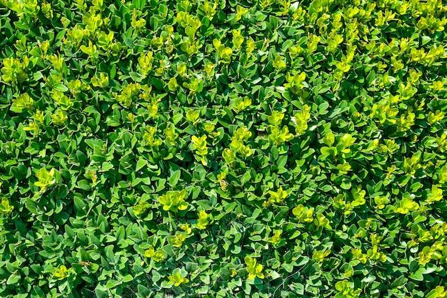 美しい植物はコピースペースで明るい色で背景を残します